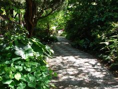 pebble mosaic path through a shady garden