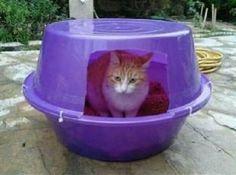 Kedi Evi Yapımları - agaclar.net