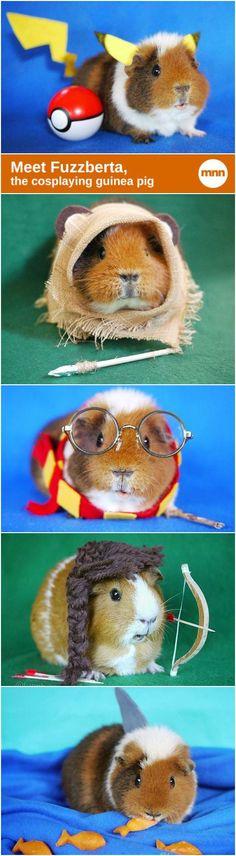 Meet Fuzzberta, the cosplaying guinea pig!: