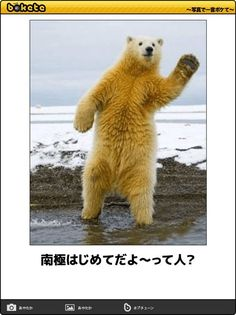 Cute Funny Animals, Cute Baby Animals, Animals And Pets, Funny Cats, Polar Bear, Cute Babies, Dog Cat, Comedy, Jokes