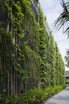 Image 9 of 28 from gallery of Naman Retreat the Babylon / Vo Trong Nghia Architects. Photograph by Hiroyuki Oki Green Architecture, Landscape Architecture, Landscape Design, Vertikal Garden, Green Facade, Small Backyard Design, Urban Farming, Green Building, Small Gardens