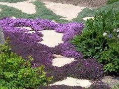 "Location: Low spot with heavy foot traffic Solution: Creeping thyme (i.e. 'Pink Chintz' - photo above courtesy of GardeningForNature blog). ""There are also varieties of thyme, like lemon thyme, that when you step on them release a wonderful scent,"" says Epstein"