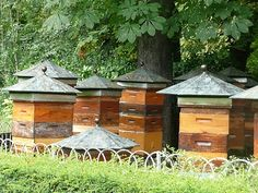 Bee Hives & Nice Architectural Roofs