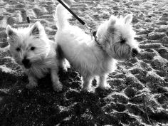 Black & White Sunday: Sand In Our Paws, Please?