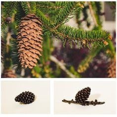 """Modern Objects Hardware on Instagram: """"Pine cone knobs and pulls to bring nature into your home. All the beautiful detail of nature, cast in pewter and made in the USA.…"""" Pinecone, Knobs And Pulls, Cactus Plants, Pewter, Objects, It Cast, Hardware, Detail, Usa"""