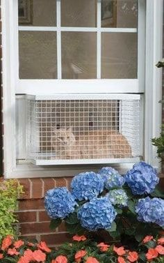 Learn how to make your own 'catio' here.