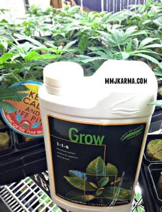 Lush, sturdy growth from 3-part base nutrients designed specifically for your Karma Plants. Get your Advanced Nutrients in store or online. Don't forget to check out the Karma Klones while you are in!  mmjkarma.com