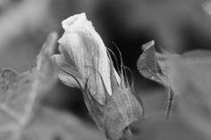 Alabama Chanin: Organic Cotton Bloom
