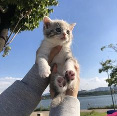 These pretty cats will warm your heart. Cats are incredible companions. Cute Baby Cats, Cute Little Animals, Kittens Cutest, Cats And Kittens, Baby Kitty, Pretty Cats, Beautiful Cats, Gato Gif, Cat Aesthetic