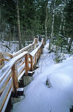 Snow-covered trail at Copper Falls State Park.