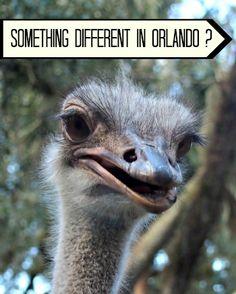 Things to Do in Orlando for Kids : Animal Farm Green Meadows Petting Farm #Orlando #Florida #USA