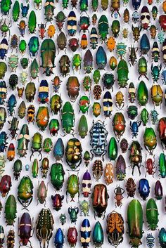 I love bugs. ..... ..why? ....