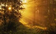 Photograph Morning in forest by Andy 58 on 500px