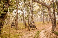 Chitwan National Park in Nepal | Traveling to Nepal | NEPAL TRAVEL: THE TINY HIMALAYAN KINGDOM EXPERIENCE YOU DIDN'T KNOW ABOUT