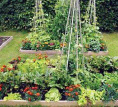 Vegetable raised bed garden