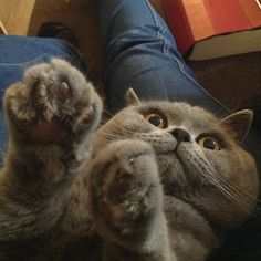 This kitty who is trying to joke but can't help but be adorable.