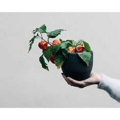 Brand new batch of large volcanic black stoneware planters now online ⚫️ 📷 by @erikarax