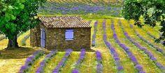 Quinta das Lavandas localizada no Parque Natural da Serra de São Mamede, em Castelo de Vide, no Distrito de Portalegre
