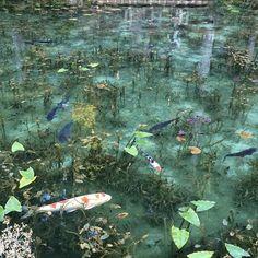 岐阜県関市、根道神社の近くにある小さな池が「モネの池」といわれネットで話題になっている。