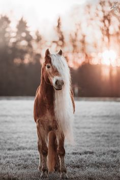 Beautiful Horse Pictures, Most Beautiful Horses, All The Pretty Horses, Animals Beautiful, Horse Girl Photography, Equine Photography, Cute Horses, Horse Love, Spirit The Horse