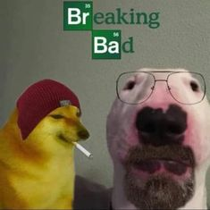 Bad Memes, Stupid Memes, Dankest Memes, Funny Memes, Serie Breaking Bad, Film Anime, History Jokes, Jesse Pinkman, Bad Image