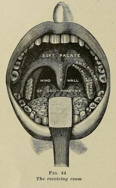 Fig. 44. Anatomy of the mouth.The practical guide to health. 1913  (https://pinterest.com/pin/287386019948302068).