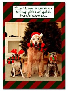 the three wise dogs christmas card 350 dogstuffcom dog christmas cards - Dog Christmas Card Ideas
