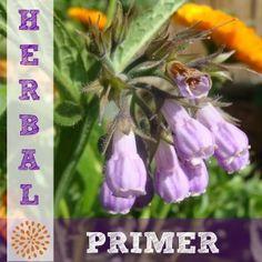 Making Your Own Medicine Capsules {Herbal Primer Series}