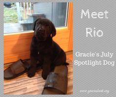 Let's all give a warm welcome to our July Spotlight Dog Rio! Check out his story at: http://www.graciesbark.org/2014/07/05/meet-rio-gracies-spotlight-dog-july/