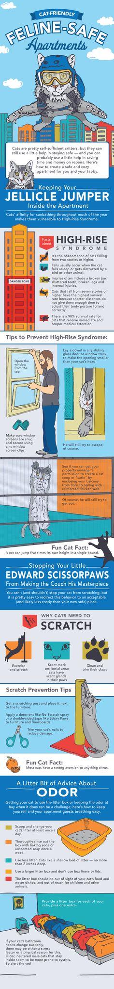 Die 16 besten Bilder von DIY Fundstücke für Katzenfreunde in ...