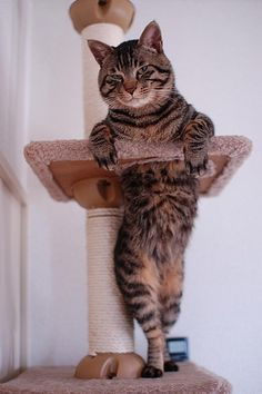 "This cat looks like it should be in a Playgirl magazine, it's all ""Hey there ladies...."""