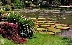 #RomaHotel Jardim Botanico