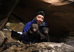 A 6-year study of Colorado bears is upending assumptions about their encounters with humans  Researchers began their study in response to rising numbers of human-bear conflicts and the changing climate   Colorado Parks & Wildlife researchers are finishing their six-year study of black bears. Their data challenges core assumptions that have shaped management policies for decades — including whet…
