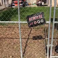 Beware of dog? Alright then - Funny Dog Quotes - When you lie on your resume and still get the job LOL The post Beware of dog? Alright then appeared first on Gag Dad. Funny Animal Memes, Funny Animal Videos, Cute Funny Animals, Dog Memes, Funny Animal Pictures, Cute Baby Animals, Funny Dogs, Funny Quotes, Memes Humor