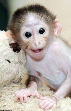 One of the cutest baby monkeys I've ever seen!