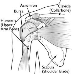 Excellent shoulder conditioning exercise tips available as pdf. Shoulder Impingement/ RotatorCuff Tendinitis Source:OrthoInfo - AAOS PT