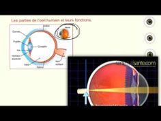 Science - Les anomalies de la vue