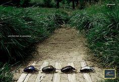 ... ¿4 escarabajos cruzando la calle sobre un paso de cebra?