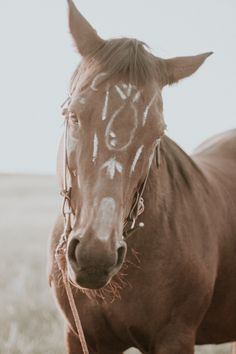 Medicine Hat Alberta Photography by Maria St. Wander, Medicine, Horses, Hat, Photography, Animals, Chip Hat, Photograph, Animales