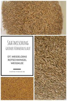 Saatgut zur Begrünung des Hühnerauslaufs Grundmischung aus dt. weidelgras, Rohrschwingel und Weißklee.