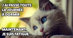 17 problèmes de chats qui vous déchireront le coeur, dur dur d'être un félin !