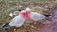 Liebe ist...! www.AustraliaAtHome.de