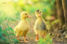 Duck by Sinan Kaymak on 500px