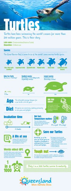 Turtles have been swimming the world's oceans for more than 200 million years. This is their story. #infographic #turtles #greatbarrierreef