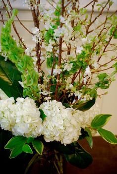 Blooming branches, bells of Ireland, white hydrangea and magnolia leaves in tall arrangement