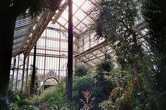 Exquisite glasshouses are found in botanic gardens around the world.