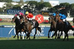 Burbero (NZ) 2008 B.g. (O'Reilly (NZ)-Royal Remedy (AUS) by Royal Academy (USA) 1st ATC Ajax S (AUS-G2,1500mT,Rosehill), ATC Missile S (AUS-G2,1200mT,Randwick) (photo: Racing and Sports)