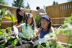 Mother and daughters planting herbs in sunny garden