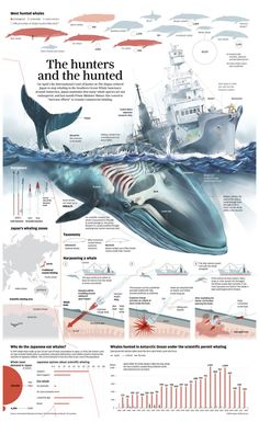 Futuristic Architecture Discover Whale Poaching in Japan [Infographic] Whale Hunting in Japan Infographic. Information Visualization, Data Visualization, Motifs Animal, Marine Biology, Ocean Creatures, Information Graphics, Futuristic Architecture, Sea World, Ocean Life