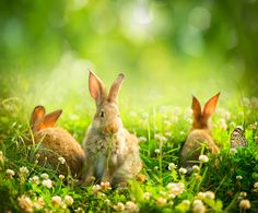 Rabbits Poster Beauty Art Design of Cute Little Easter Bunny in the Meadow Poster Spring Flowers and Green Grass Poster Sunbeams Poster. Framed Artwork, Wall Art Prints, Canvas Prints, Beach Landscape, Beauty Art, Graphic, Animals Beautiful, Find Art, Stock Photos